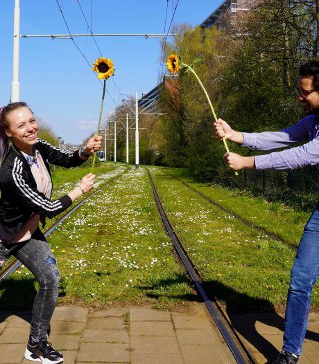 Vlaardingen moet 1500 zonnebloemen rijker worden dankzij challenge