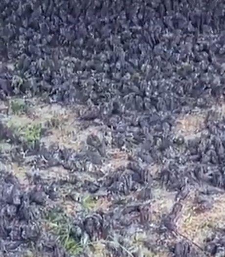 Des centaines d'oiseaux meurent mystérieusement dans un cimetière