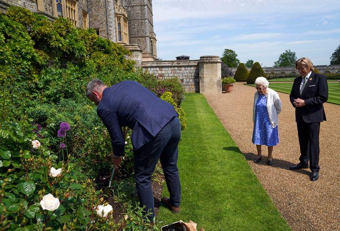 Un employé du château s'est chargé de planter la rose pour la Reine.