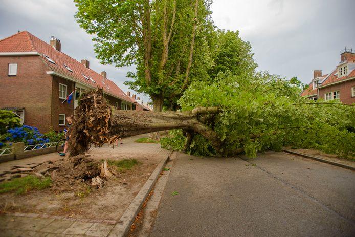Een omgevallen boom in Tilburg.