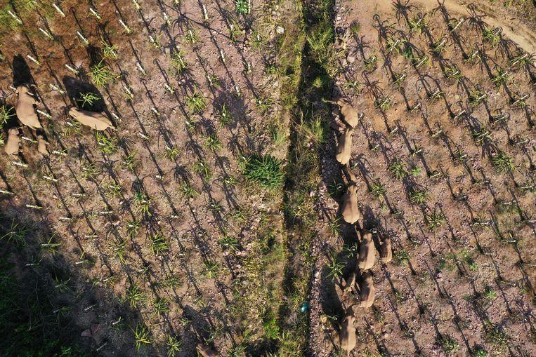 Olifanten op reis. Beeld VCG via Getty Images