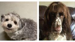 Hilarisch: ook deze honden worstelen met een quarantainecoupe
