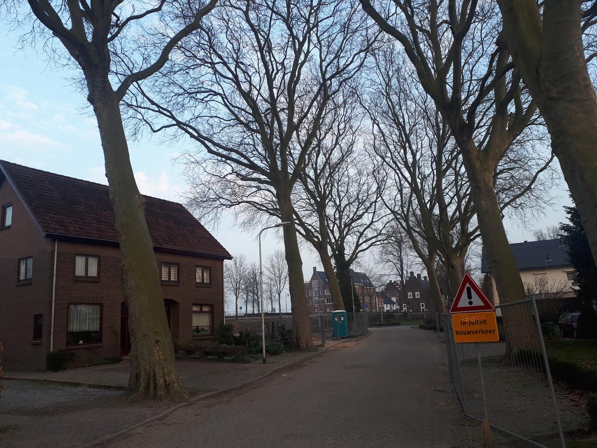 Links de drie bomen aan de Korte Loostraat die flink worden weggesnoeid, om ruimte te maken voor de bouw van het seniorenappartementencomplex.