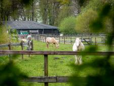 Vrouw die trap kreeg had hersenbloeding: 'Paarden zagen haar waarschijnlijk als zwakste schakel'