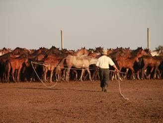 Wetenschappers ontdekken de oorsprong van paarden