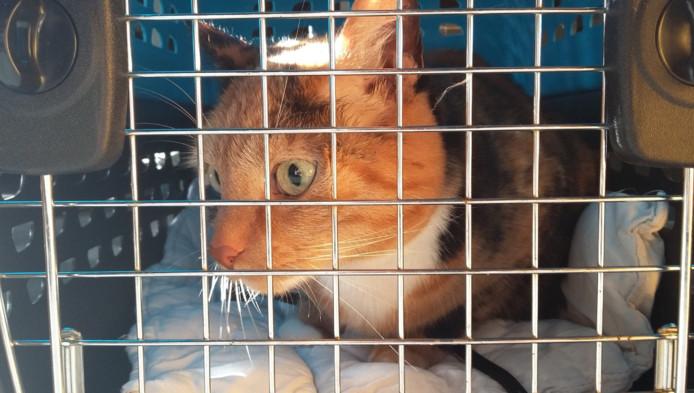 De Glazen Huis-kat