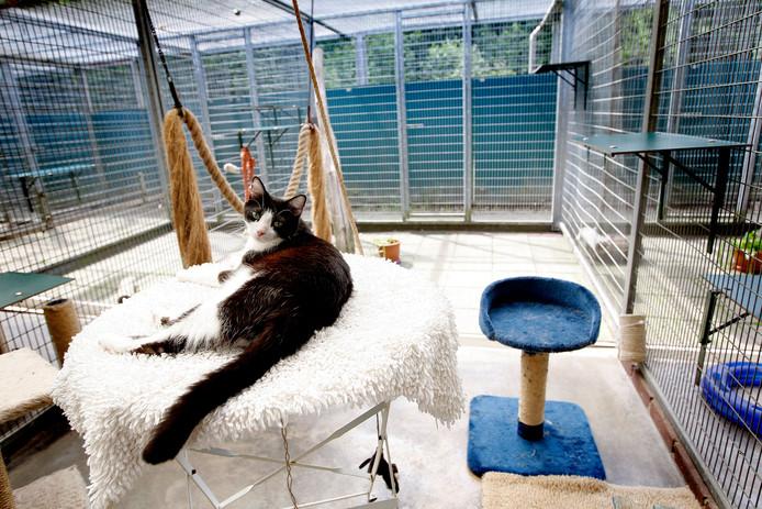 Een kat in dierenasiel De Hof van Ede, archieffoto.