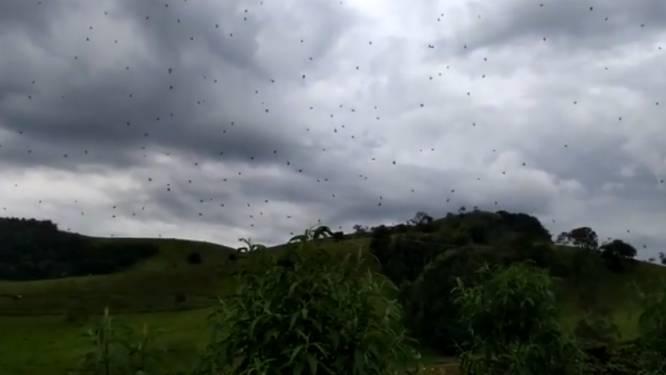 """""""Het regent spinnen"""": achtpotige luchtbezetters in Brazilië doen monden openvallen (en rap weer sluiten)"""