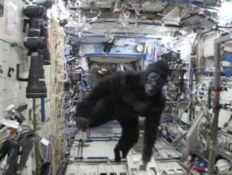 Wat doet gorilla in het ISS?
