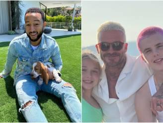 CELEBS 24/7. John Legend heeft een nieuwe puppy en de familie Beckham kiest voor een kleurrijke coupe