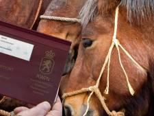 Spanjaard in Valkenswaard verhandelde paarden voor miljoenen, maar betaalde nergens belasting