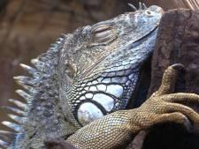 Hoop bij noodlijdend dierenpark De Oliemeulen na persconferentie: 'Maar het mag wel een stukje sneller'