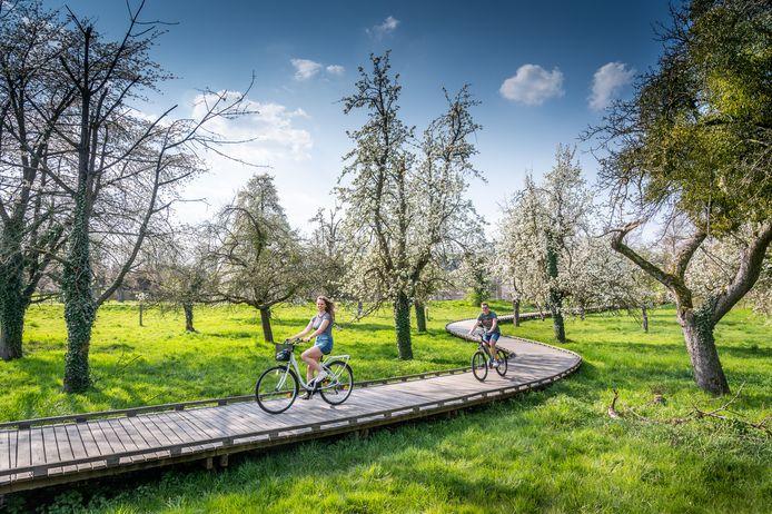Hoogstamboomgaard van Alden Biesen in Bilzen