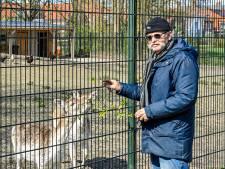 Zorgen om herten op kaal veldje in Dinteloord
