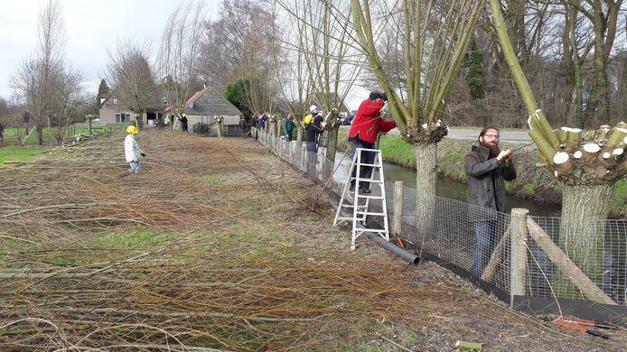 Wilgen knotten bij de Groene Grens tussen Ede en Veenendaal op archiefbeeld.