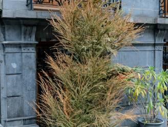 Kerstboomophaling vanaf dit jaar via de groenophaling in de wijken