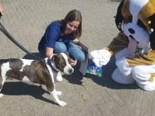 Woef! Honden zoeken paaseieren in dierenziekenhuis in Breda
