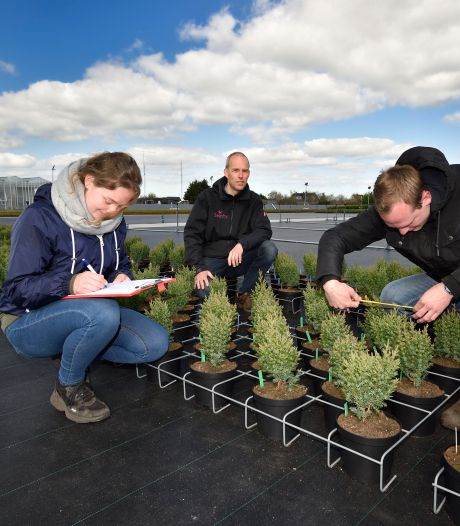 Hoe voorkom je dat buxus kaal wordt gegeten door ongedierte? Wilco helpt kwekers met beschermen van planten en bomen
