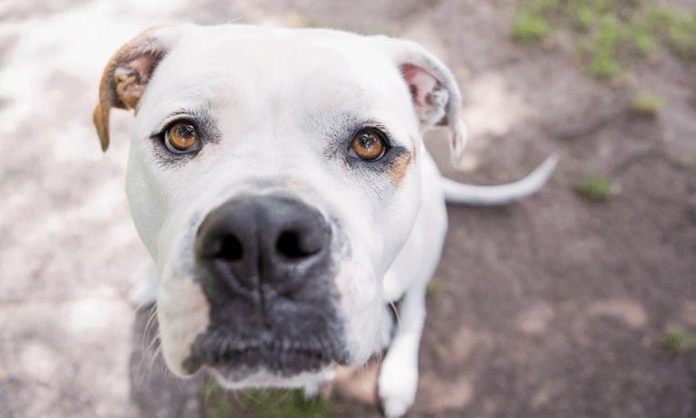 Het verhaal van Benny: het hondje dat op sterven ligt