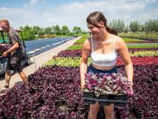 Ondernemers met handen in het haar: 'Help, hoe kom ik deze zomer aan vakantiehulp?'