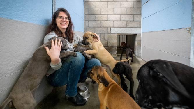"""""""Geen tijd meer, ongewenst gedrag of een verhuis"""": Dierenbescherming Mechelen heeft dezer dagen de handen vol met opvang van dieren"""