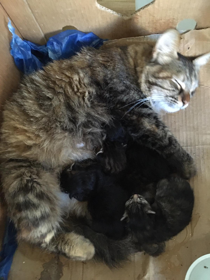 Kittens op Lesbos