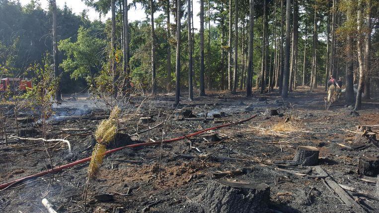 Een deel van het bos aan Grees werd vernield.