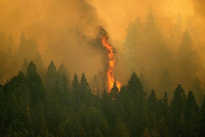 """Le feu brûle dans la """"Sequoia National Forest"""", en Californie, le jeudi 16 septembre 2021."""