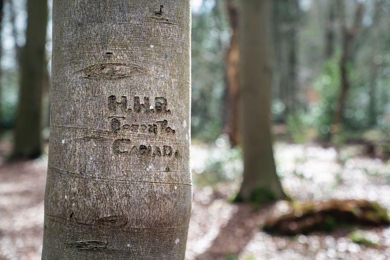 De initialen in de boom laten juist één van de vele kleine verhalen achter dat grote verhaal zien. Het verhaal van de Canadees Roszell, die als jonge soldaat in Nederland was tegen het einde van de Tweede Wereldoorlog, en omkwam met de haven in zicht Beeld Reyer Boxem