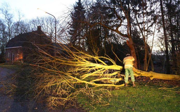 Boom omgewaaid in Helvoirt op de vroege donderdagochtend.