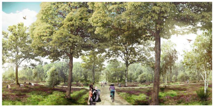 Zo moet het Drongengoed er binnen een paar jaar uitzien. Met meer 'lichtgaten' in het bos.