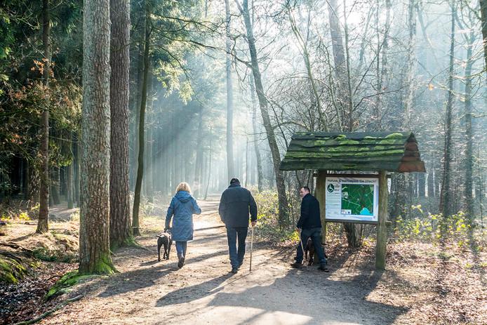 Mensen wandelend in het zonlicht dat zijn weg naar beneden door de bomen vindt.