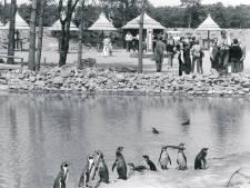 De hoogtepunten uit het 50-jarig bestaan van Safaripark Beekse Bergen