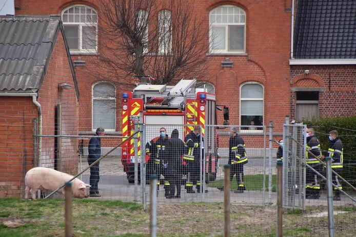De brandweer rukte uit naar het landbouwbedrijf van de familie Neirynck, langs de Wingensesteenweg in Egem, om varkens te redden die in een beerput waren terechtgekomen.
