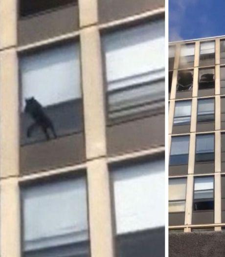 Un chat saute du cinquième étage d'un immeuble pour échapper à un incendie