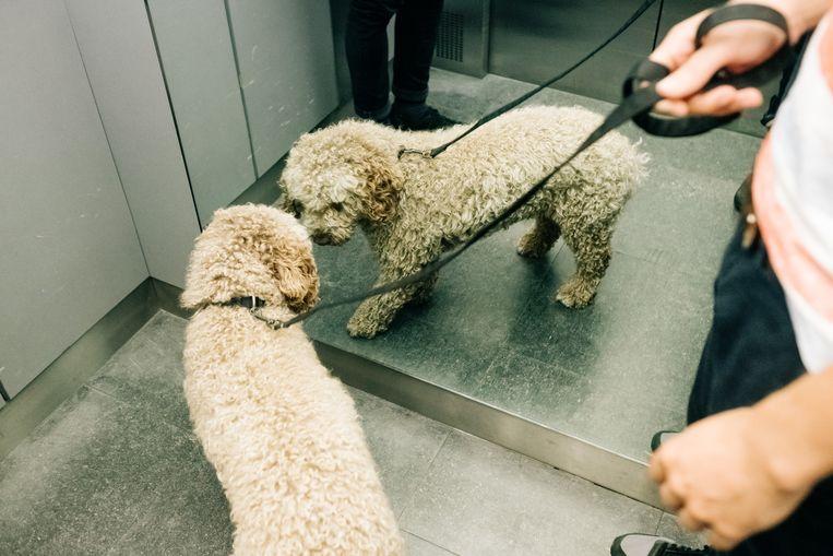 Pippa neemt de lift. Beeld Wouter Van Vooren