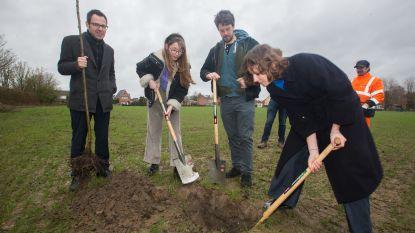 Youth for Climate en stad planten klimaatboom
