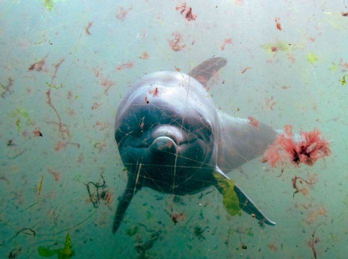 Parkmanager Alex Tiebot kondigde gisteren aan showelementen met dolfijnen te schrappen.