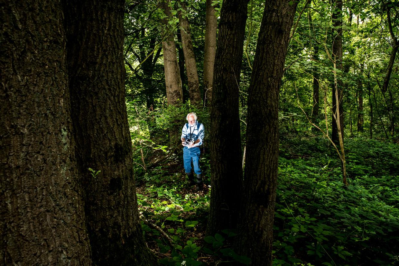 BertMaes geeft een rondleiding in de Zelderse Driessen in Noord-Limburg, een 'pareltje' van een bos dat is uitgebreid met 'kletskoekbomen'. Beeld Jan Mulders
