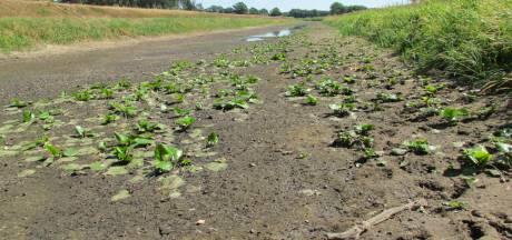 Achterhoeks landschap wacht forse ingrepen om water langer vast te kunnen houden; ook Berkel op de schop