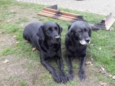Baasjes gewekt door hond Indy: 'Een uur later en we waren er niet meer geweest'