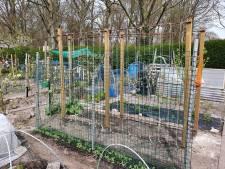 Corinne en Jan oogsten rijkelijk in eigen tuin: 'Ik kom vrijwel nooit op de groenteafdeling van de supermarkt'