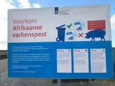 Waarschuwing tegen Afrikaanse varkenspest ook bij Volkel