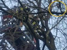 Brandweer Vreden bevrijdt kat die al dagen 12 meter hoog vast zit in boomkruin