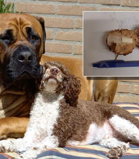 In 'vergiftigde gehaktballen' in Warnsveld blijkt kauwgom te zitten: 'Heel gevaarlijk voor honden'