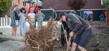 'Geroofde' bomen krijgen een tweede leven bij montessorischool in Goes