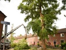Oude, maar gevaarlijke acacia's verwijderd in de Heuvel: 'Uiteindelijk is het beter zo'