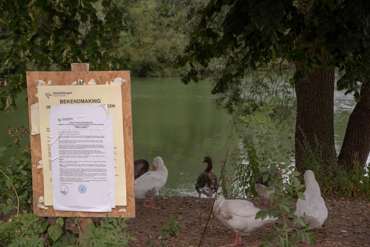 Er geldt een algemeen recreatieverbod aan het Damvalleimeer. Zelfs de eenden lijken het te respecteren.