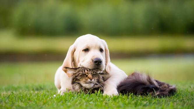 Brakel verdeelt gratis sticker die het leven van huisdieren kan redden