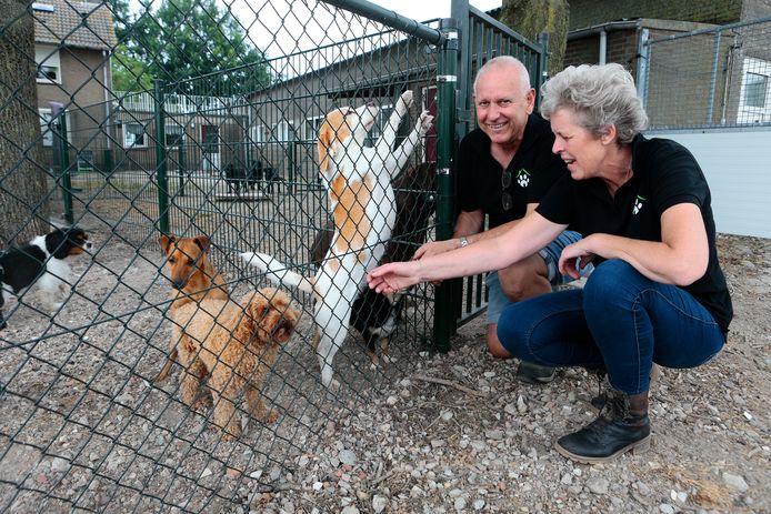 Marjon en Gerard Branten van hondenpension Sennyards tussen Engelen en Haarsteeg zijn in deze tijd flink in de weer met bijna vijftig honden.